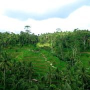 Ubud Balinese Rice Terrace View